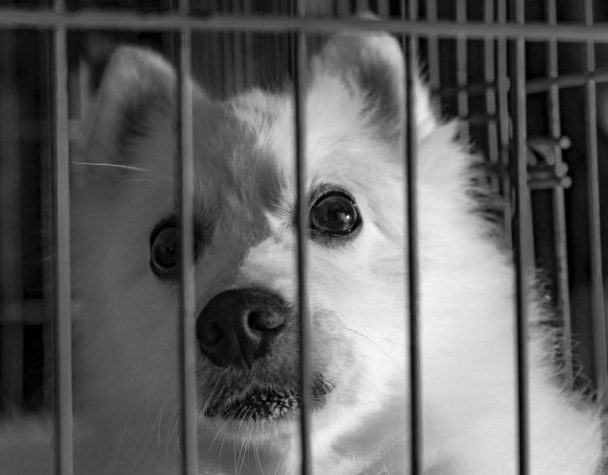 Scared dog in a cage