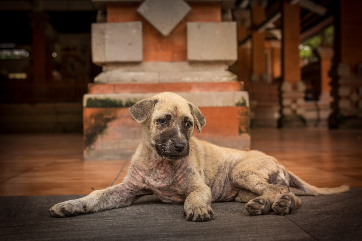 Neglected brown puppy